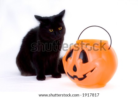 Curious Black Kitten and Candy Pumpkin. - stock photo