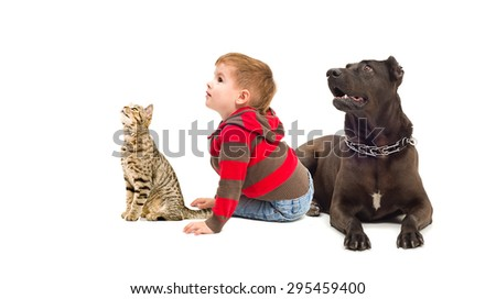 Curious boy, a dog and a cat sitting together isolated on white background - stock photo
