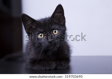 Curious Cat - stock photo