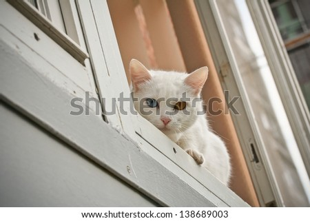 curious cat at window-sill