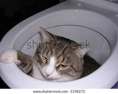 Curious cat has got into a toilet during repair - stock photo