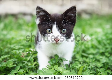 curious Cat in the grass - stock photo