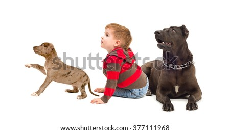 Curious child and dogs isolated on white background - stock photo