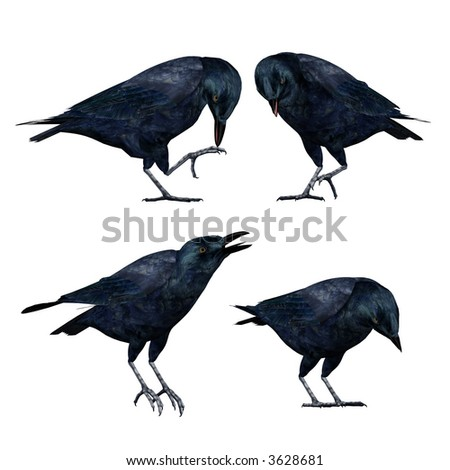 Curious Crows - stock photo