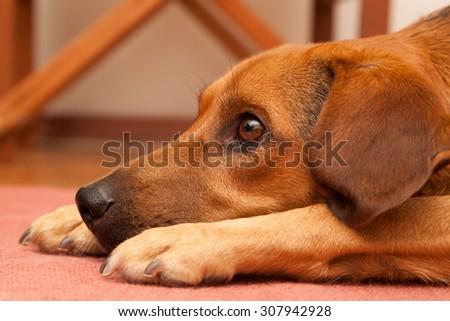 Curious dog - enhanced colors - stock photo