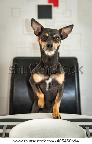 Curious dog waiting for food - stock photo