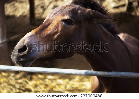 Curious donkey in a paddock in Skorino farm, Cyprus. Close-up portrait photo - stock photo