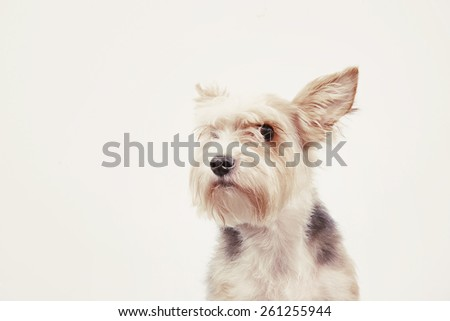 curious friendly dog with attentive look instagram toned - stock photo