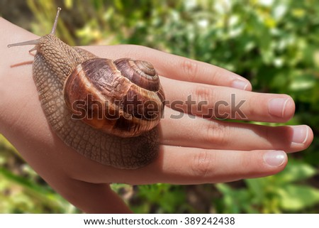 Curious grape snail slowly crawling on human hand with green garden in the background. - stock photo