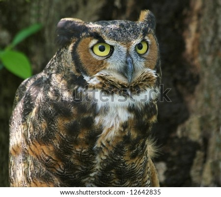 Curious Great Horned Owl
