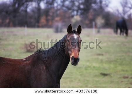 curious horse portrait - stock photo
