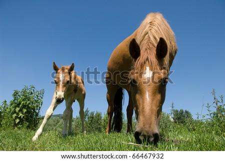 Curious horses - stock photo