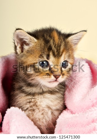 Curious little kitten in a pink blanket looking so cute - stock photo
