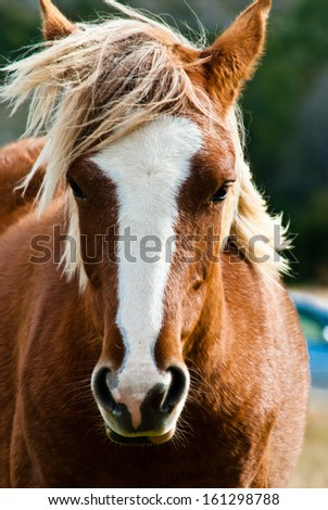 Curious look of the beautiful horse - stock photo