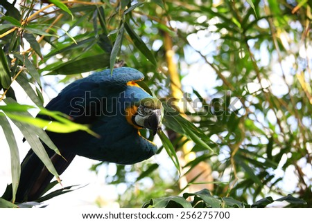 Curious looking blue macaw - stock photo