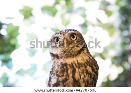 Curious looking Owl - stock photo