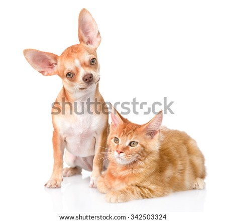 curious puppy sitting beside kitten and looking in camera. isolated on white background - stock photo
