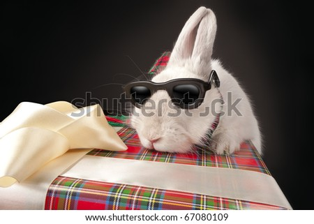 Curious rabbit in sun glasses climbing up gift box over dark background - stock photo