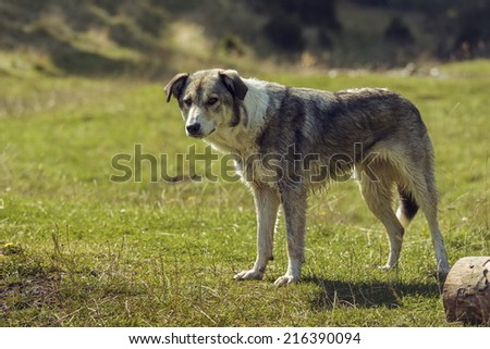 Curious stray lonely dog begging for food. - stock photo