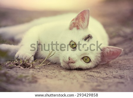 Curious white cat looking at the camera - stock photo