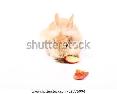 Curious young red rabbit eating