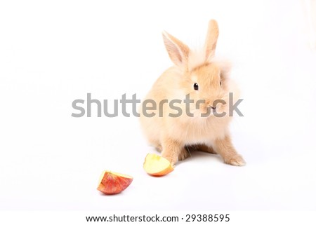 Curious young red rabbit with apple