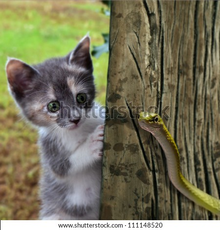 Curiousity - stock photo