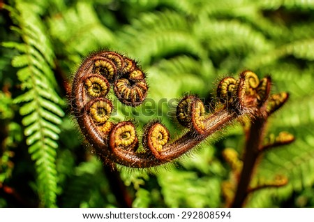 Curled  young leaf of fern. Nature background. Close-up - stock photo