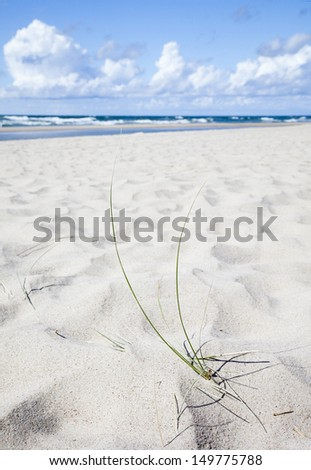 Curonian Spit, Lithuania  - stock photo