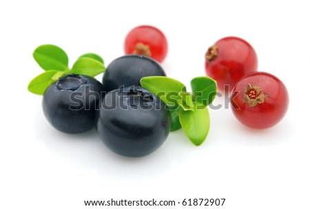 Currant and blueberry