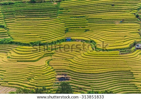 Curve road in the beautiful terraced rice field in Laocai, Vietnam