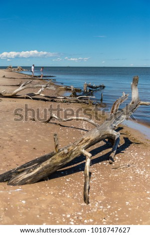 Curved logs on the beach