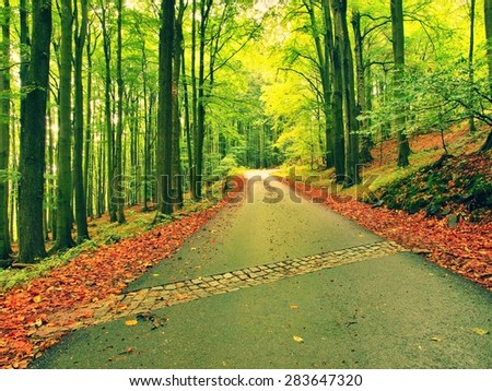 Curved path bellow beech trees. Spring afternoon in forest after rainy day. - stock photo