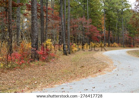 Curved road lined with colorful leaves and trees - stock photo
