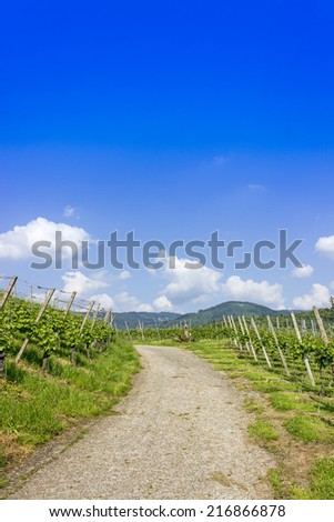 Curved trail leading through vineyard landscape on a sunny summer day  - stock photo