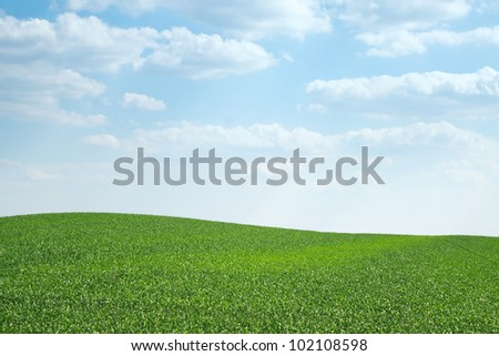 Curved young wheat field on the hill at sunny day - stock photo
