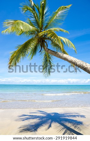 Curving palm tree casting shadow on bright empty Brazilian beach in Bahia Brazil