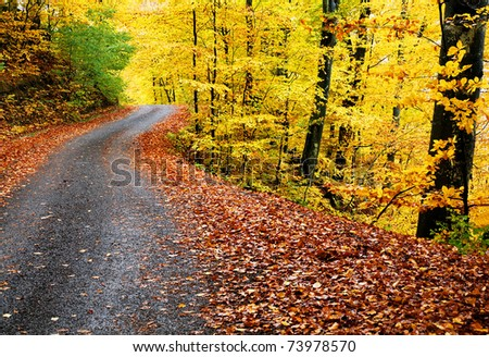 Curving road in autumn landscape - stock photo