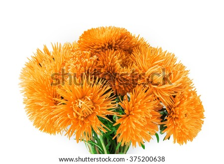 Curvy needle vibrant amber asters isolated on white background with clipping path. Close-up view with space for text  - stock photo