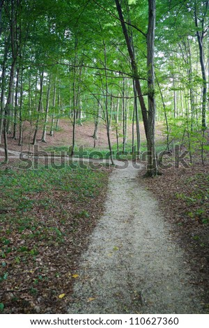 Curvy path in the green forest - stock photo