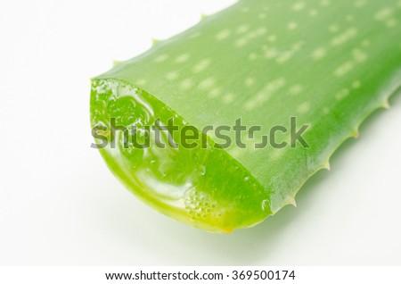 cut aloe vera - stock photo
