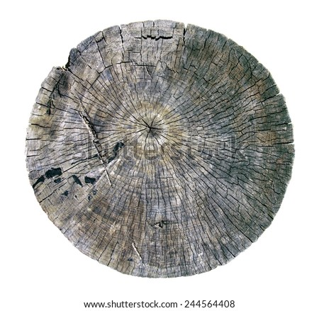 cut annual rings of a tree isolated - stock photo