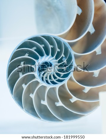 Cut away of Nautilus shell on a light blue background - stock photo