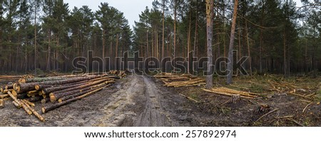 Cut down thick forest - stock photo