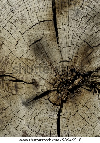 cut end of wood with signs of saw marks - stock photo
