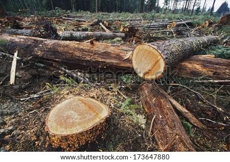 Cut Logs In Logging Area - stock photo