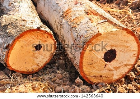 cut logs on the ground - stock photo
