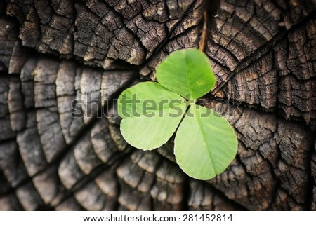 cut logs with a flower - stock photo