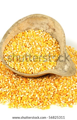 cut maize on the white background - stock photo