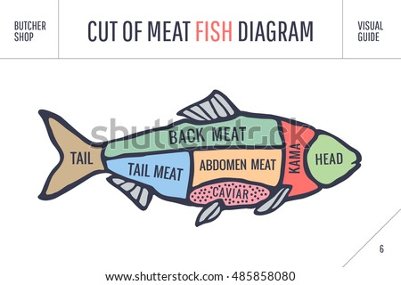 fish diagram stock photos  royalty free images  amp  vectors    poster butcher diagram and scheme   fish  colorful vintage typographic